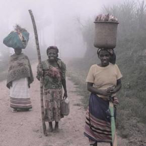 the_fog_of_bwindi_poster