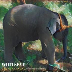 wild_seve_poster